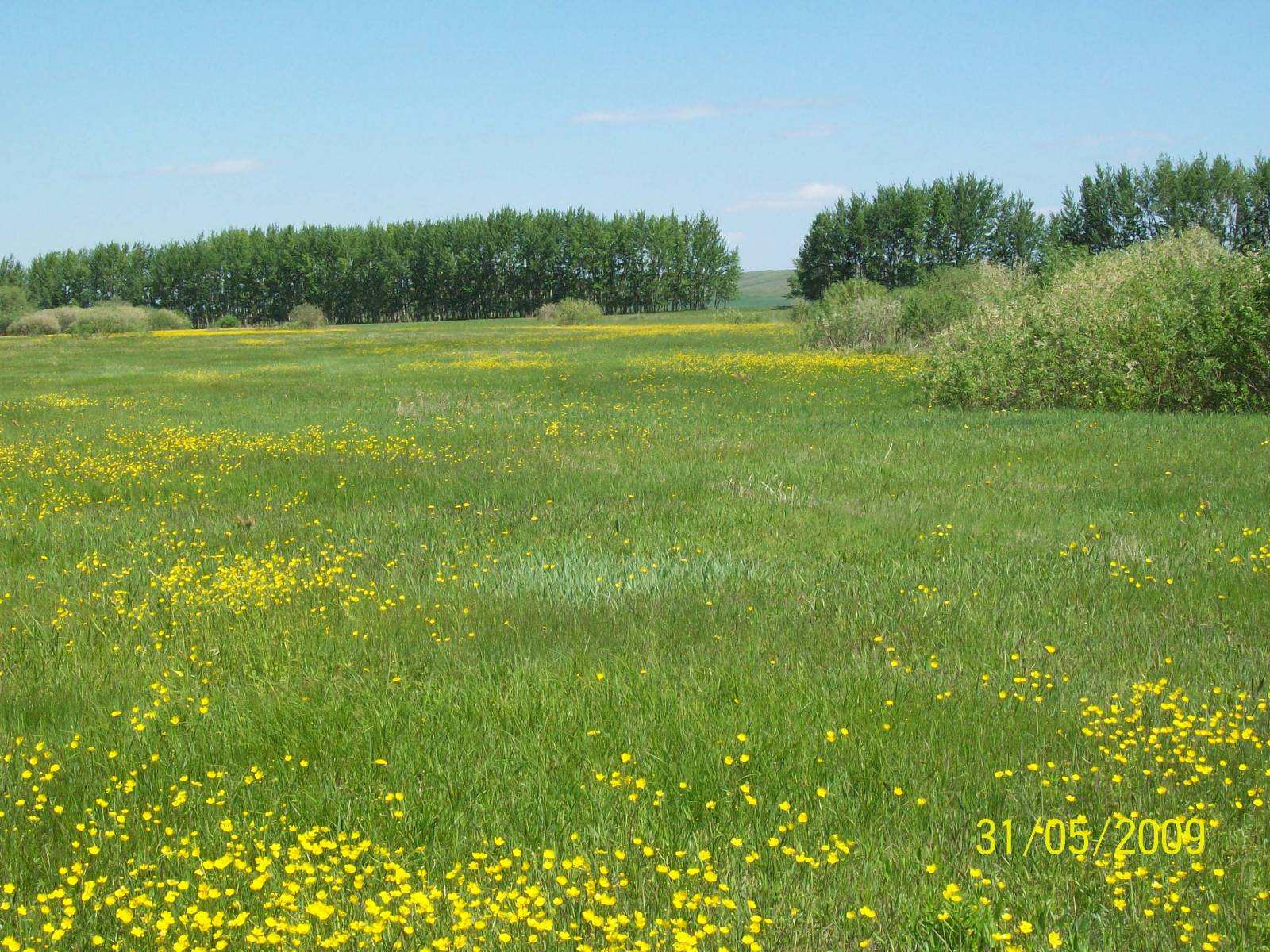 картинка луга с травой для детей